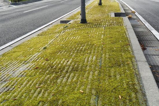 国道7号線防草緑化シート施工後