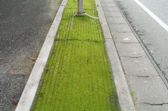 胎内リップル防草緑化シート施工後