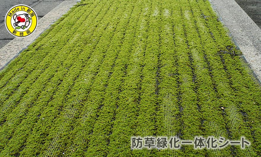 新潟の緑地帯の防草、緑化なら皆建のモスマット