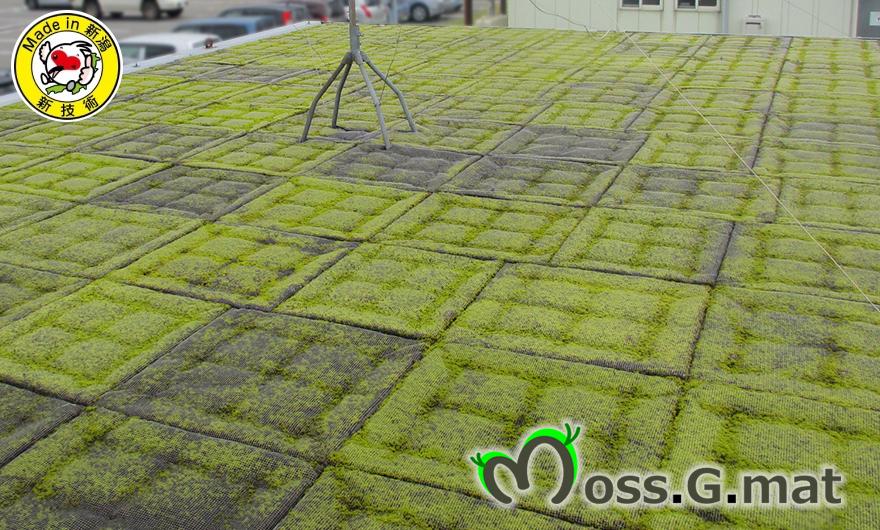 新潟の屋上緑化なら皆建のモスマット